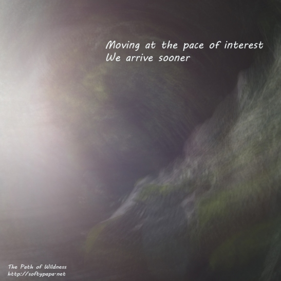 Moving slowly we arrive sooner - The Path of Wildness - MEME