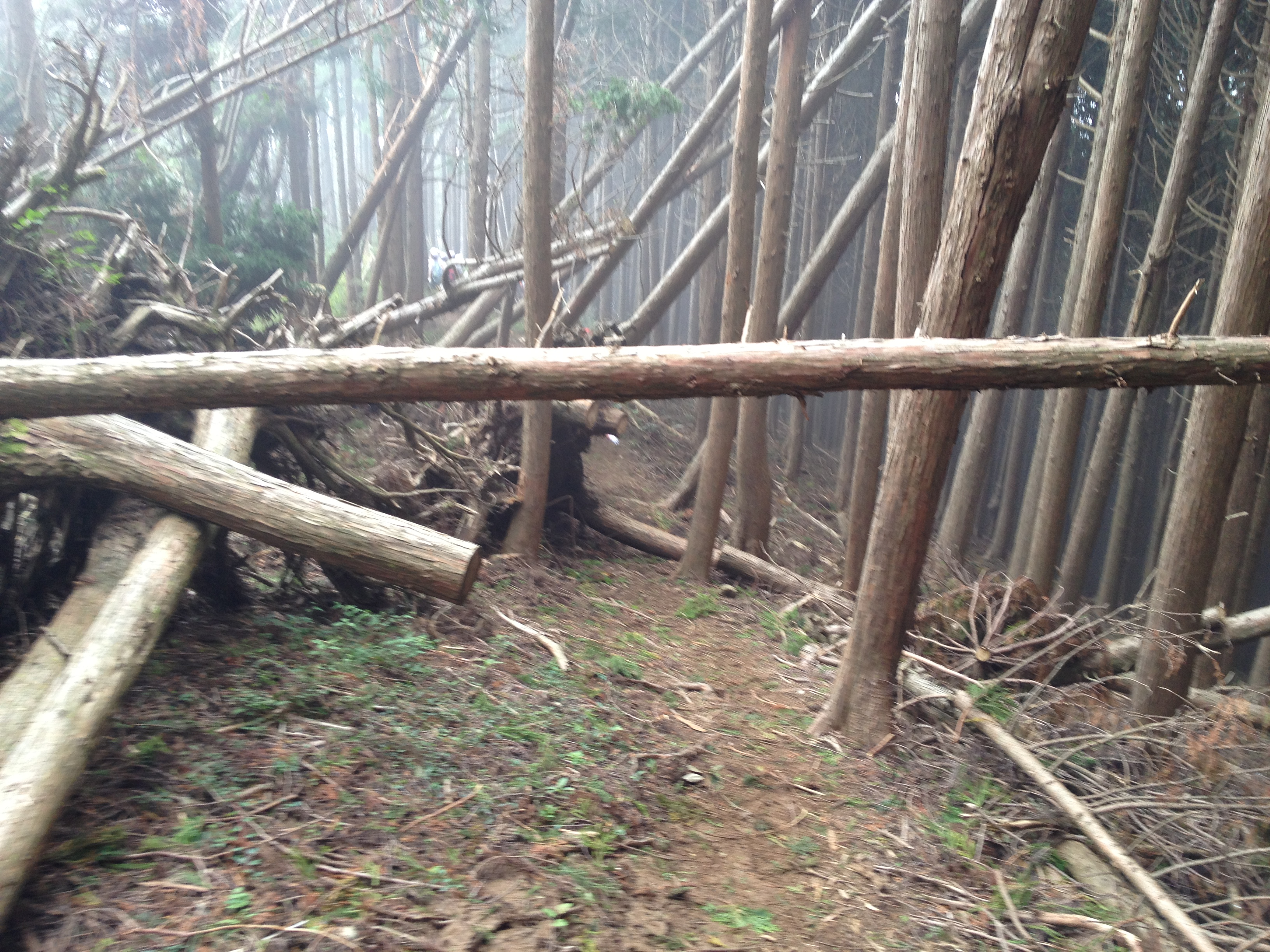 typhoon damaged forest in japan