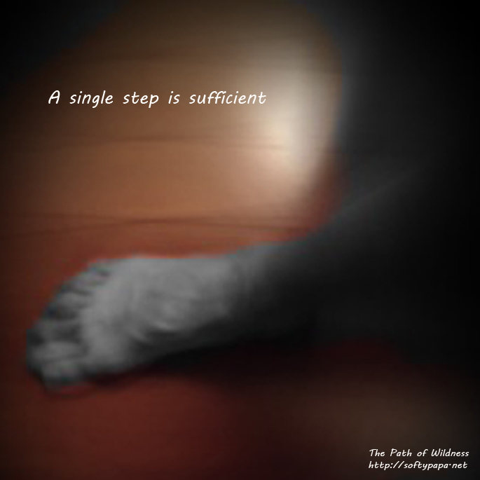 A single step is sufficient - The Path of Wildness