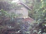 Abandoned Japanese mandarin orange farm - Abandoned Japan 02