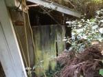 Abandoned Japanese mandarin orange farm - Abandoned Japan 12