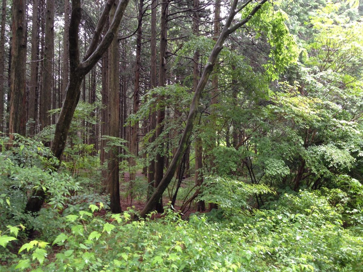 y u014dkai sighting in japan u2019s aokigahara forest