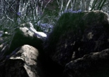 Mt. Wildness Is the landscape of fear A truly dangerous place - The Path of Wildness - MEME THUMBNAIL SQUARE
