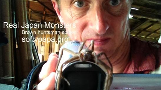 Brown huntsman spider ビッグ日本クモ - Real Japan Monsters 日本のモンスター