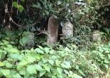 Abandoned graveyard 放棄された日本の墓地 - Abandoned Japan 日本の廃墟