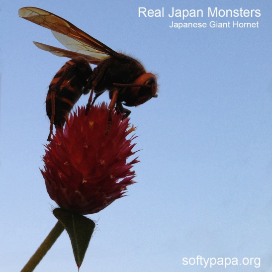 Japanese Giant Hornet on a flower - Real Japan Monsters