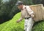 Return to the mountain top green tea farm 山頂日本緑茶ファームに戻る - Walking in Japan 日本でのウォーキング
