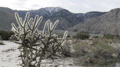 Desert cold
